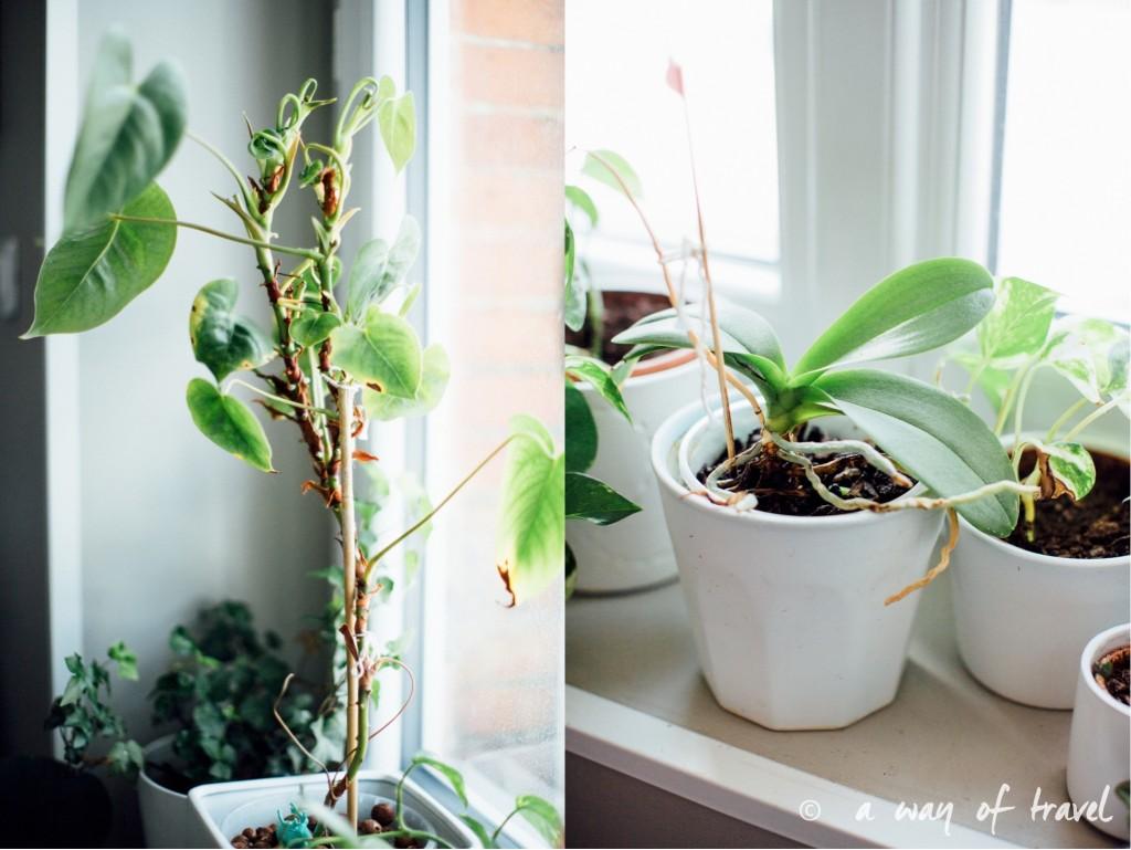 Plantes d'intérieur déco vert signification 11