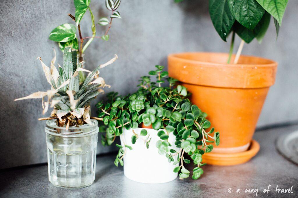 Plantes d'intérieur déco vert signification 2