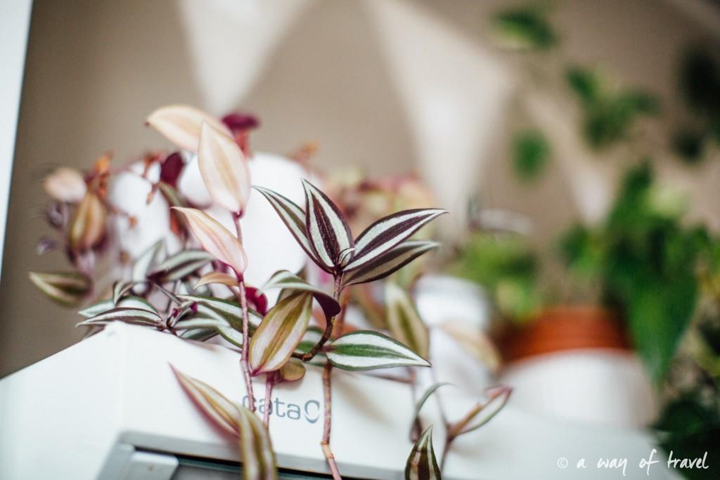 Plantes d'intérieur déco vert signification 3