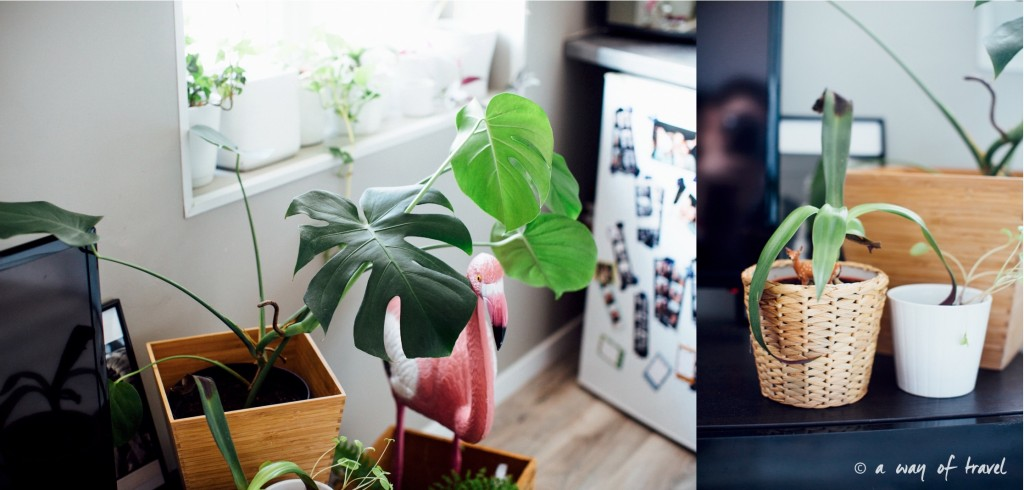 Plantes d'intérieur déco vert signification 4
