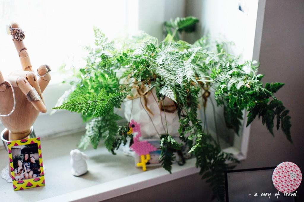 Plantes d'intérieur déco vert signification 5