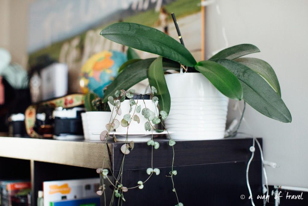 Plantes d'intérieur déco vert signification 7