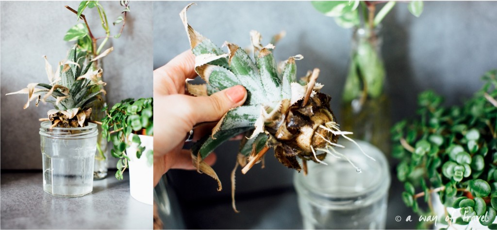 Plantes d'intérieur déco vert signification 9