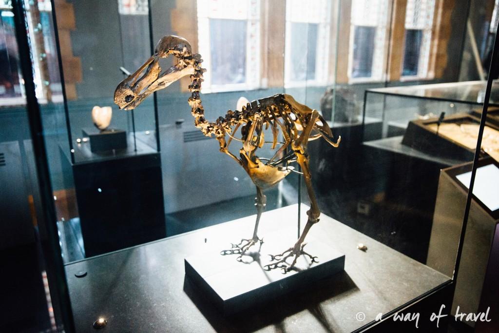 londres visiter a voir muséum histoire naturelle dodo tunnel banksy street art tags-14