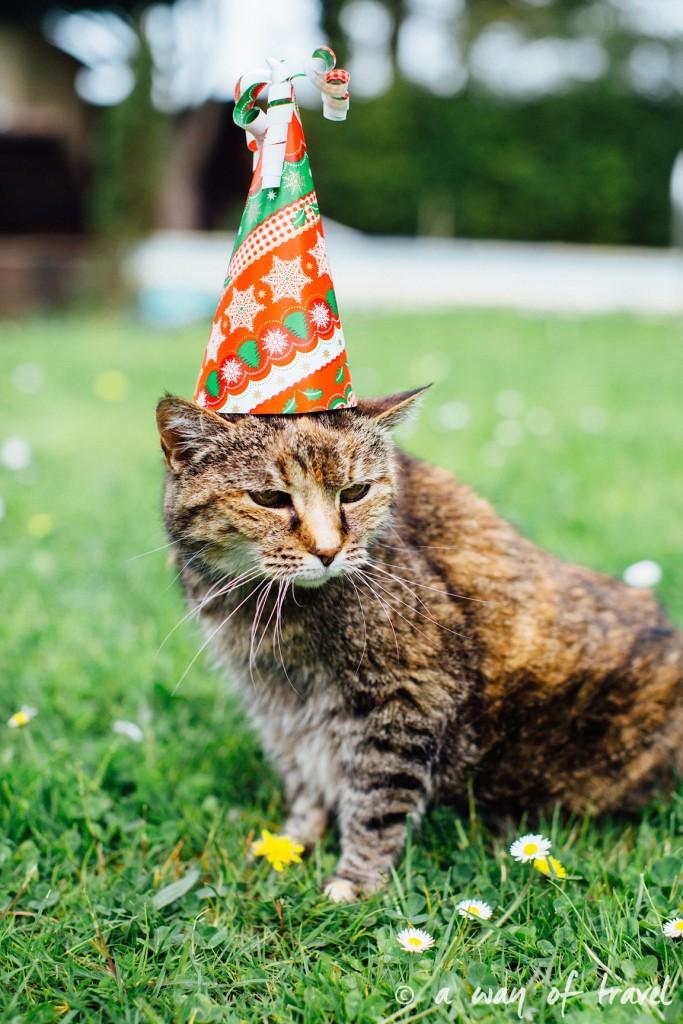 Anniversaire animaux chat myrtille longévité gateau pâté 3