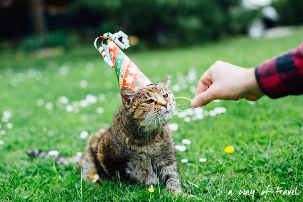 Anniversaire animaux chat myrtille longévité gateau pâté 4