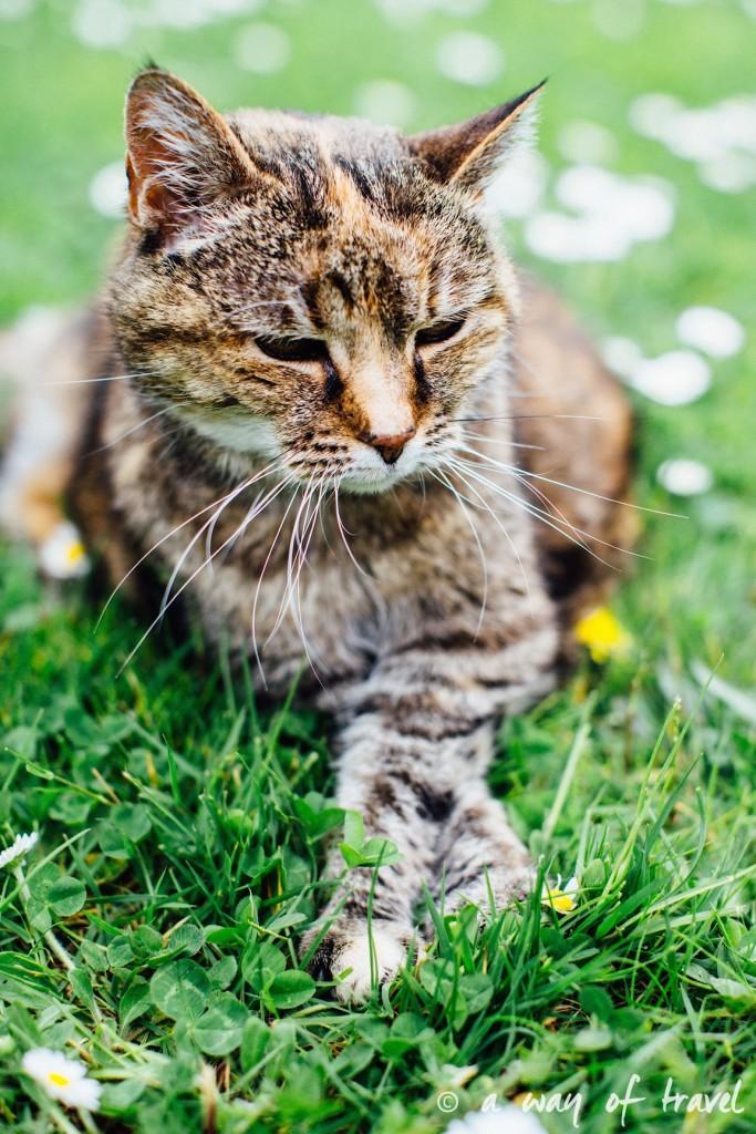 Anniversaire animaux chat myrtille longévité gateau pâté 6