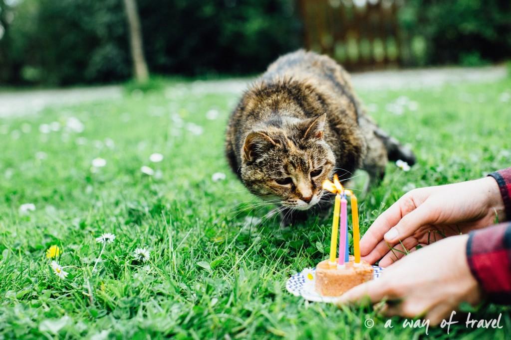 Anniversaire animaux chat myrtille longévité gateau pâté 8