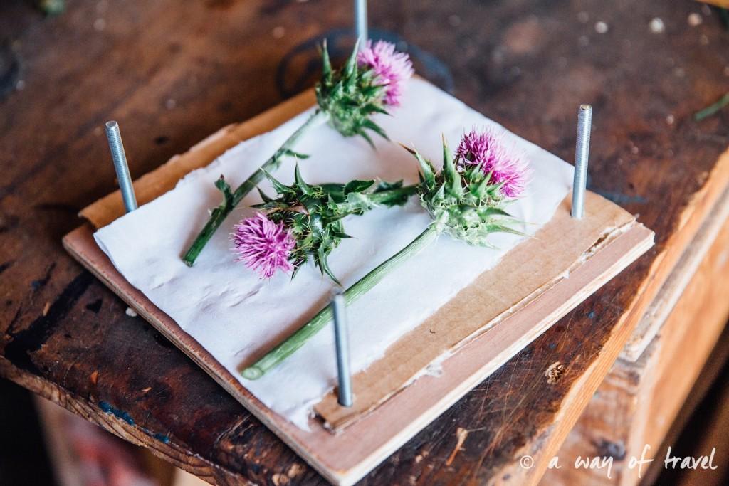 Presse Fleurs diy tUTO fABRIQUER BLOG herbier sechees chardon 5