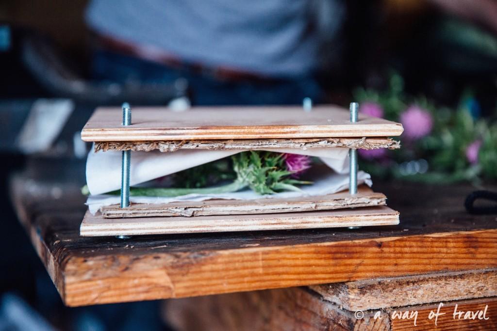 Presse Fleurs diy tUTO fABRIQUER BLOG herbier sechees chardon 8