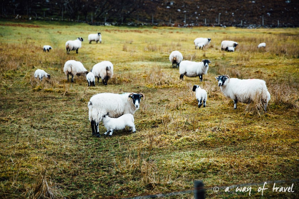 Road trip visit Ecosse scotland torridon applecross  13
