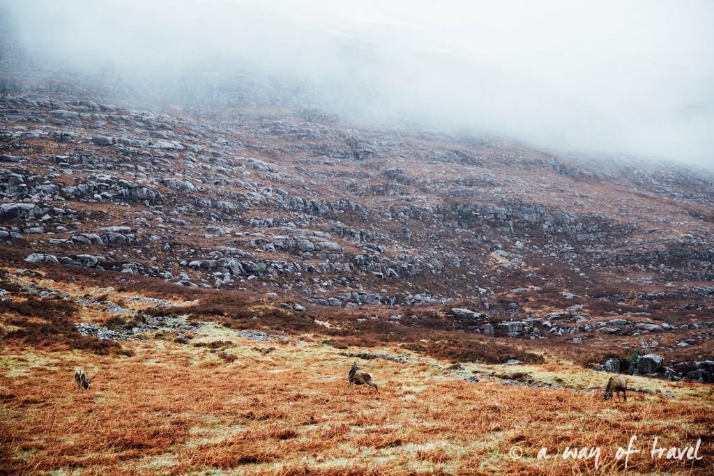 Road trip visit Ecosse scotland torridon applecross  17