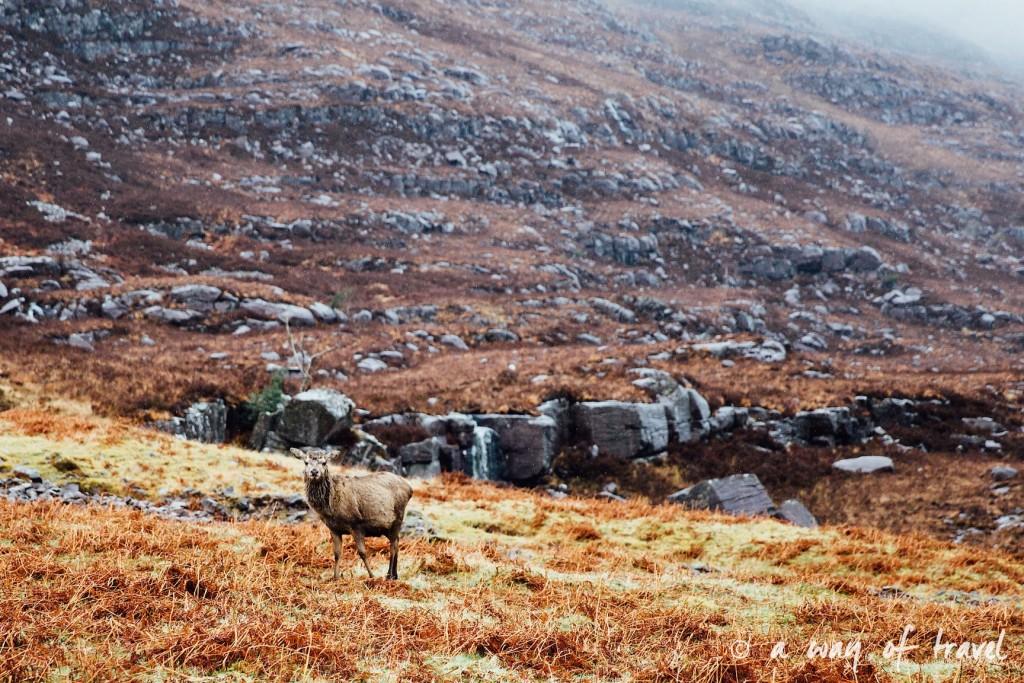 Road trip visit Ecosse scotland torridon applecross  18