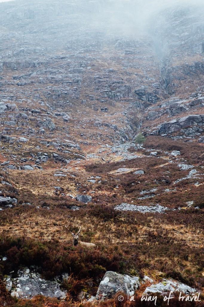 Road trip visit Ecosse scotland torridon applecross  20
