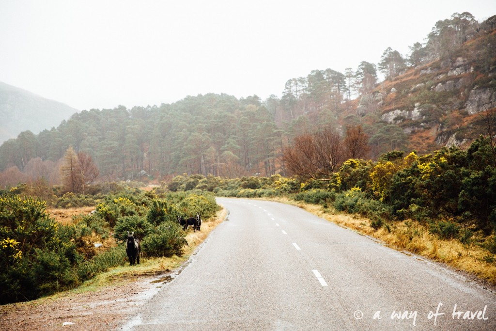 Road trip visit Ecosse scotland torridon applecross  23