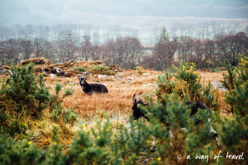 Road trip visit Ecosse scotland torridon applecross  25