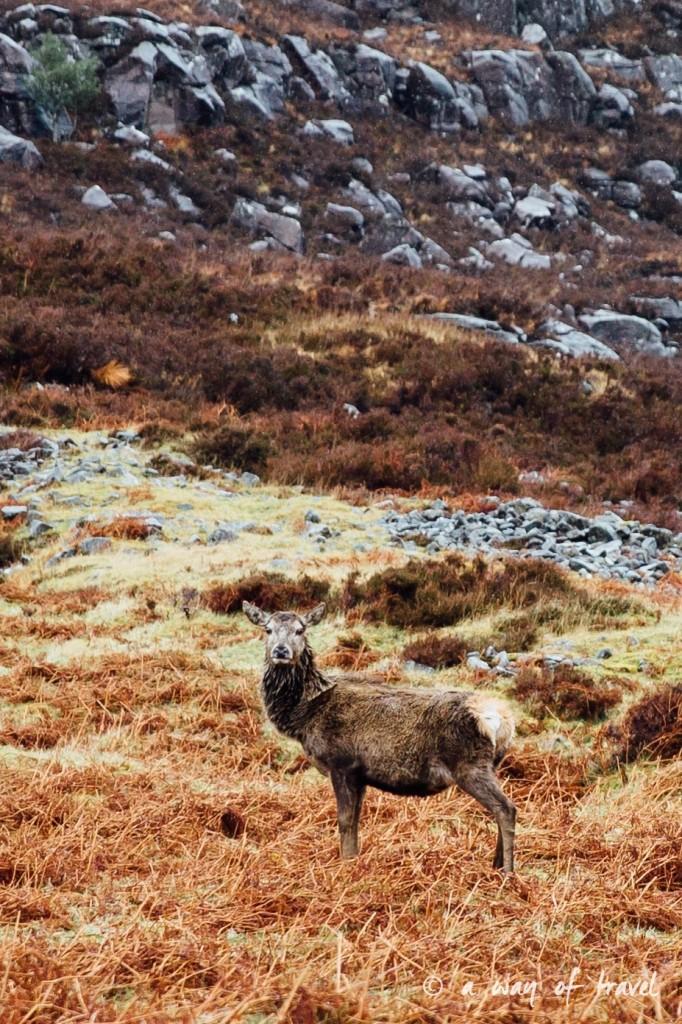 Road trip visit Ecosse scotland torridon applecross