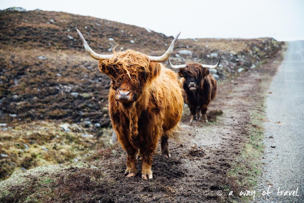 Road trip visit Ecosse scotland torridon applecross  8