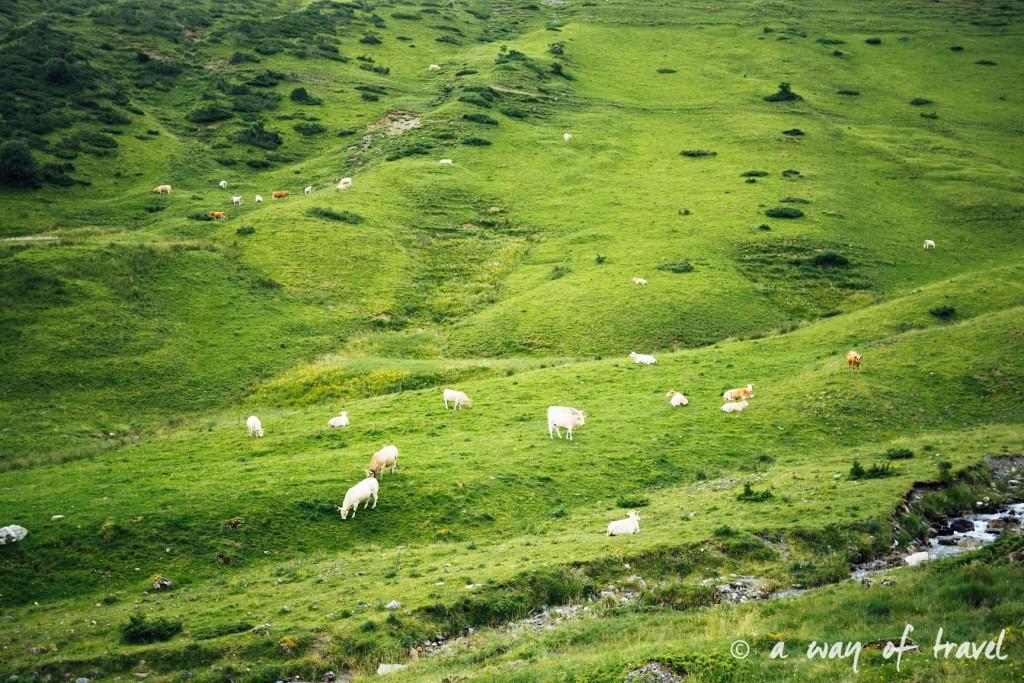 Randonnée pyrénéen lac arou Campan chevaux vaches 12