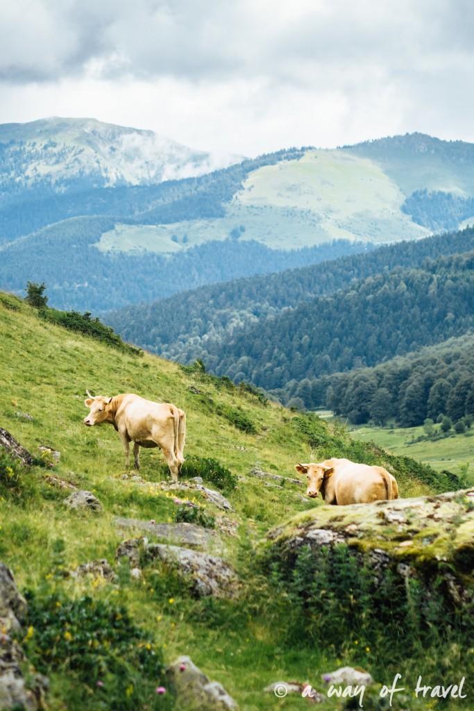 Randonnée pyrénéen lac arou Campan chevaux vaches 14