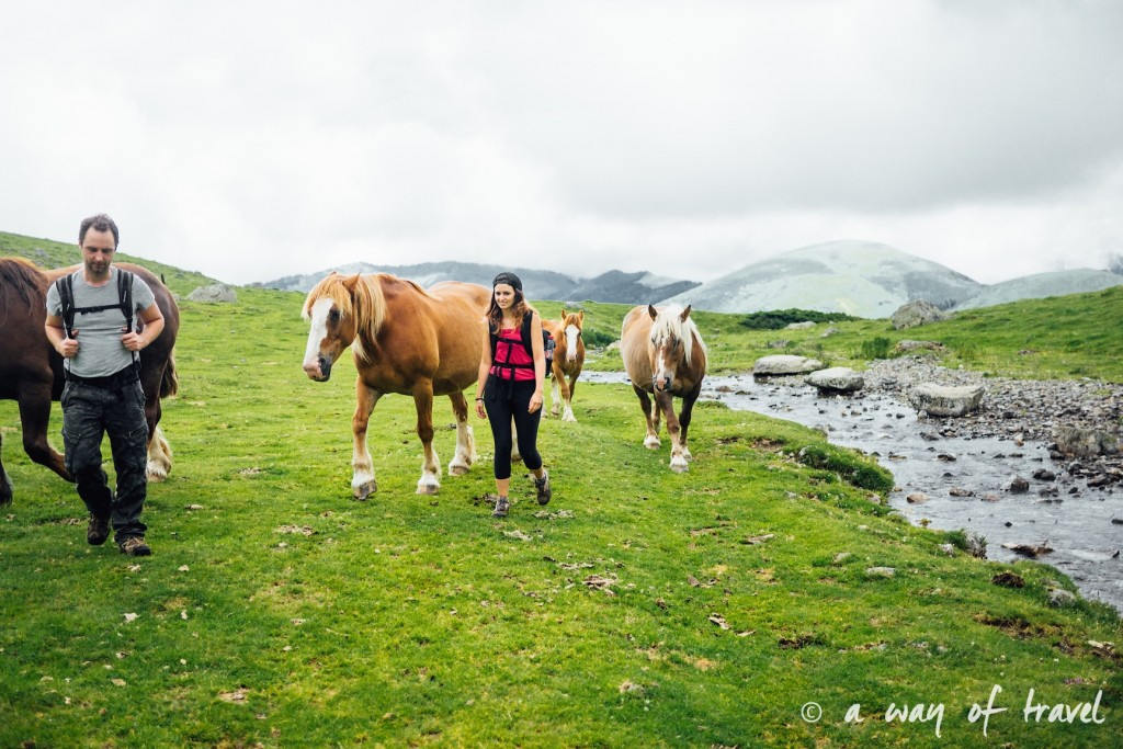 Randonnée pyrénéen lac arou Campan chevaux vaches 30