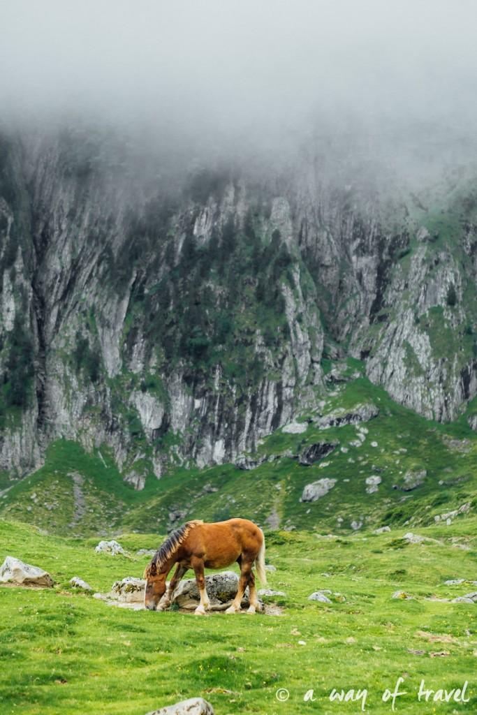 Randonnée pyrénéen lac arou Campan chevaux vaches 32