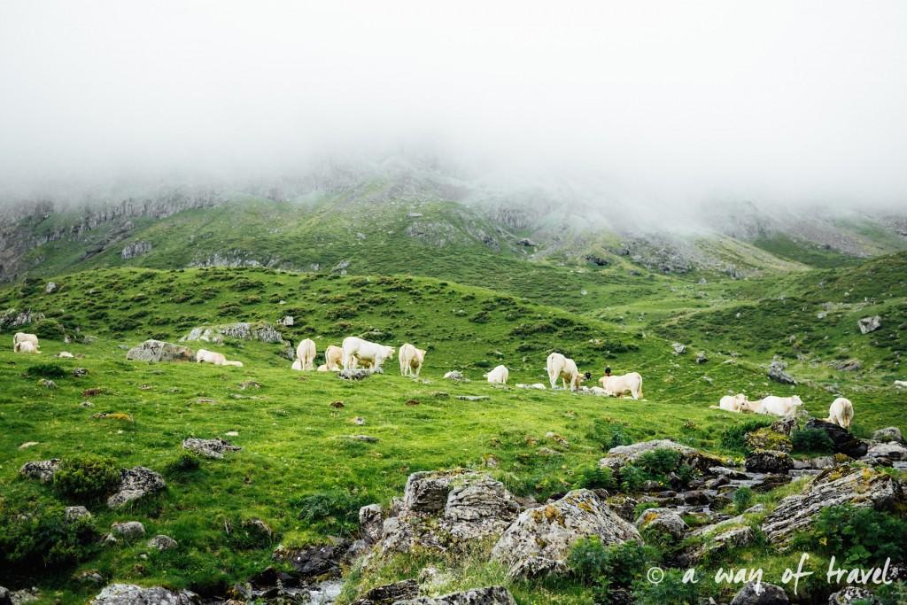 Randonnée pyrénéen lac arou Campan chevaux vaches 35