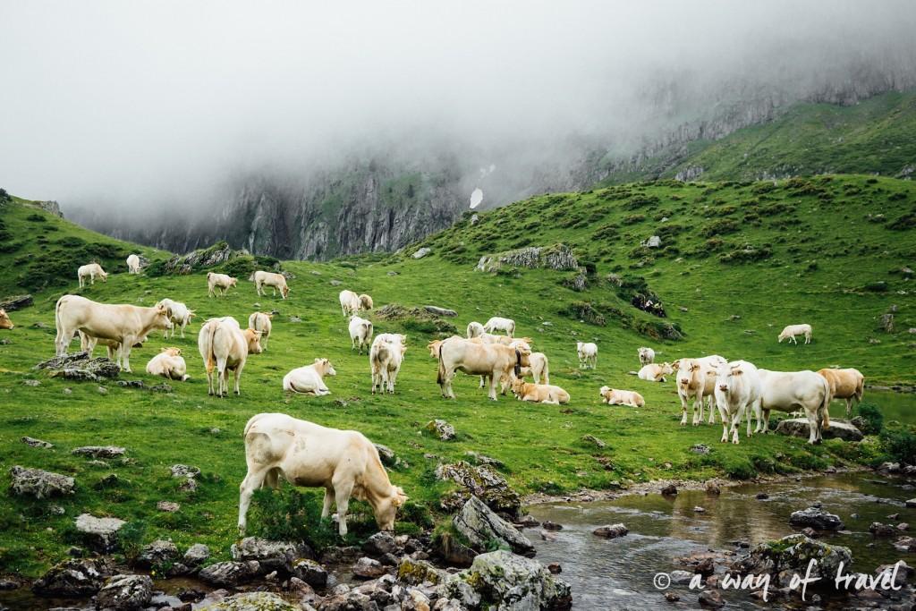 Randonnée pyrénéen lac arou Campan chevaux vaches 37