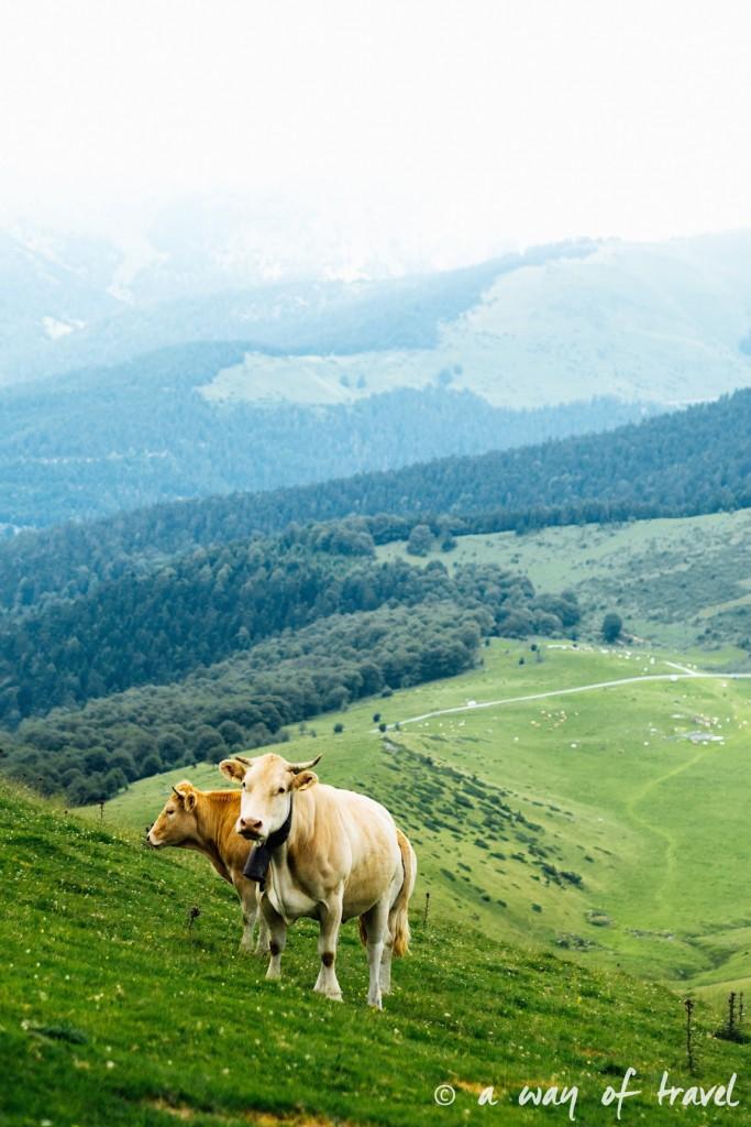 Randonnée pyrénéen lac arou Campan chevaux vaches 41