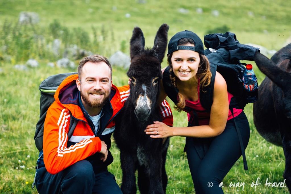 Randonnée pyrénéen lac arou Campan chevaux vaches 5