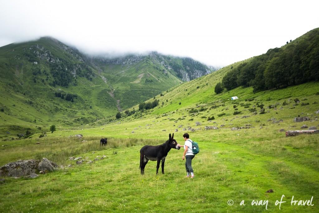 Randonnée pyrénéen lac arou Campan chevaux vaches 6