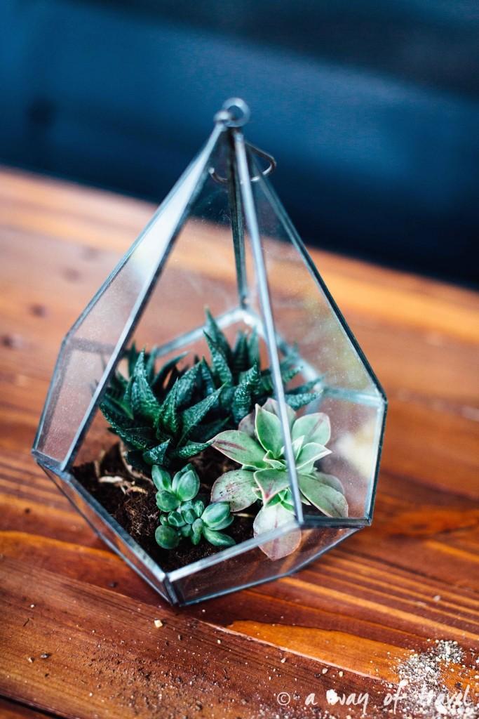 diy-tuto-terrarium-plante-grasse-succulente-2