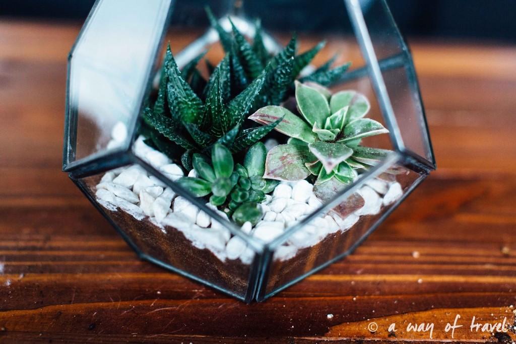 diy-tuto-terrarium-plante-grasse-succulente-4
