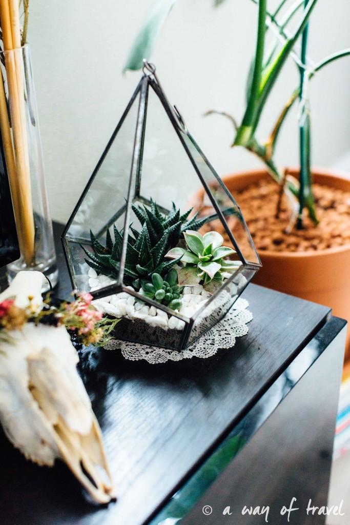 diy-tuto-terrarium-plante-grasse-succulente-5