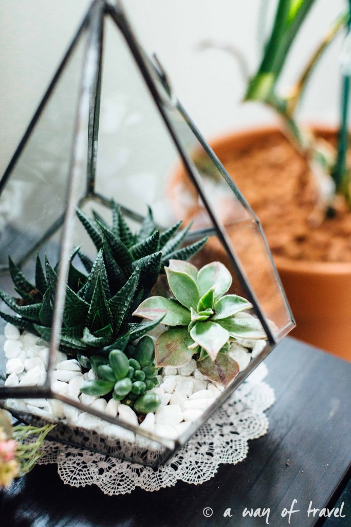 diy-tuto-terrarium-plante-grasse-succulente-6