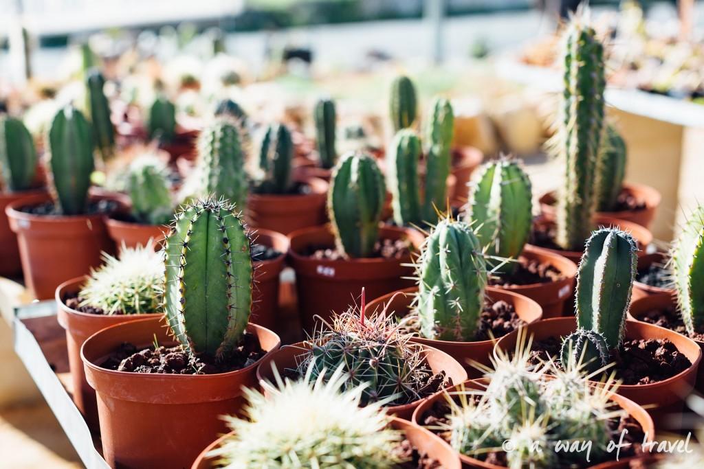 portugal-roadtrip-algarve-cactus-38