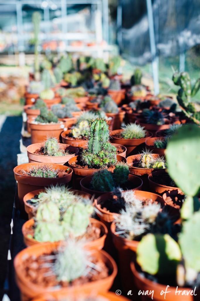 portugal-roadtrip-algarve-cactus-39