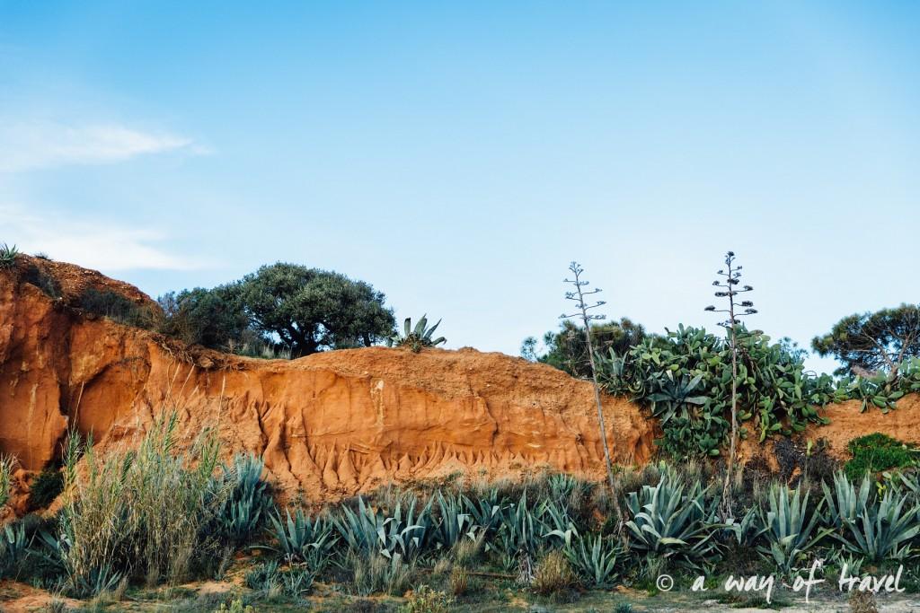 portugal-roadtrip-algarve-praia-tomatos-59