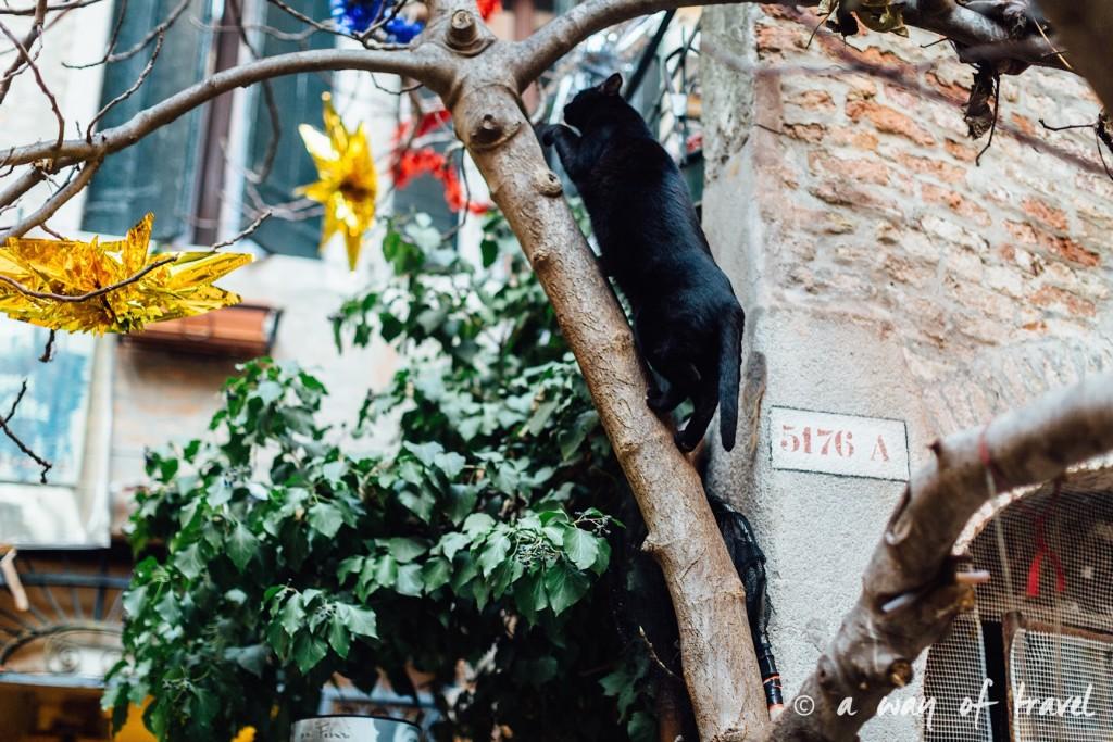 venise visiter italie venezia guide aqua alta-24