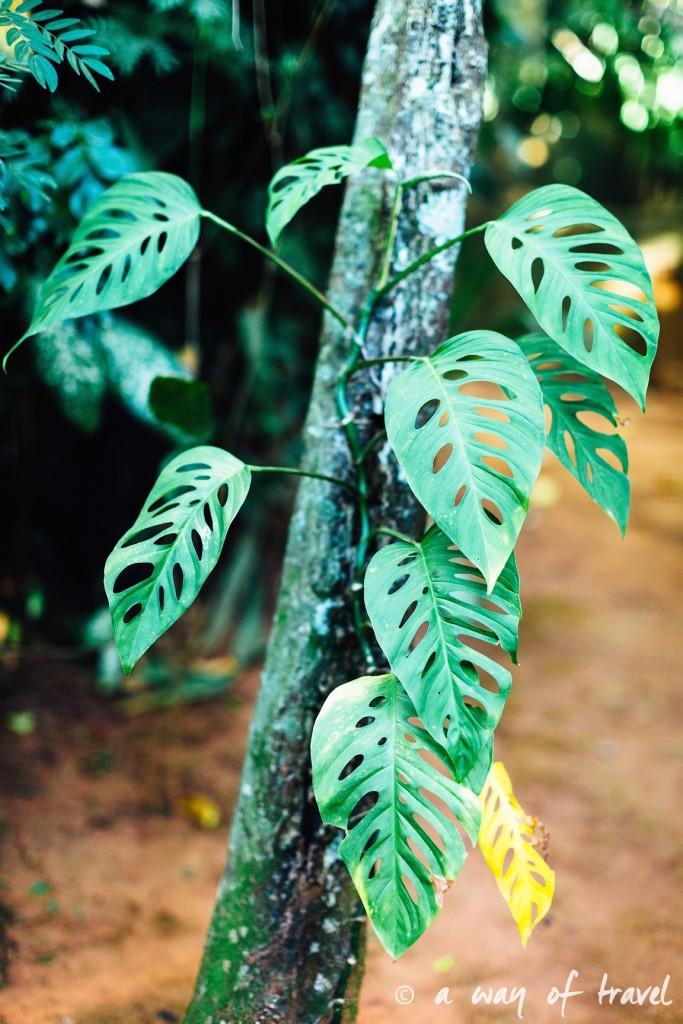 Jardin botanique Vinales Cuba Guide Voyage 64