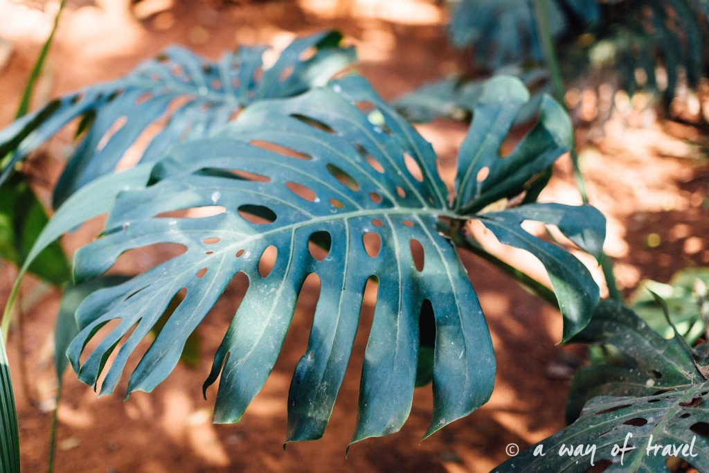 Jardin botanique Vinales Cuba Guide Voyage 65