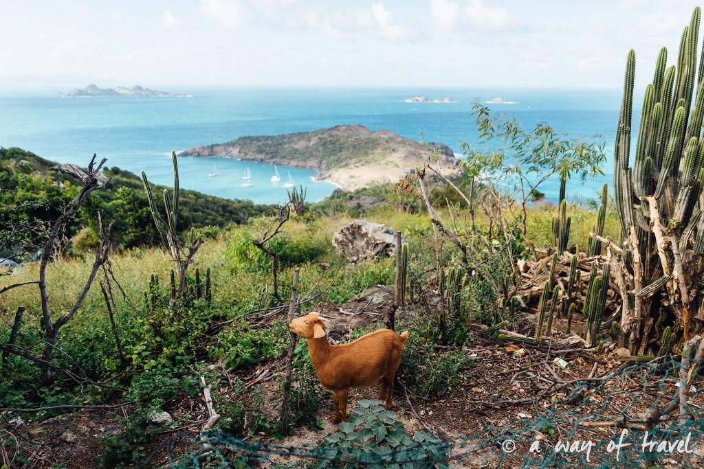 Saint Barth Barthelemy Caraibes Antilles Francaises mariage photographe 17