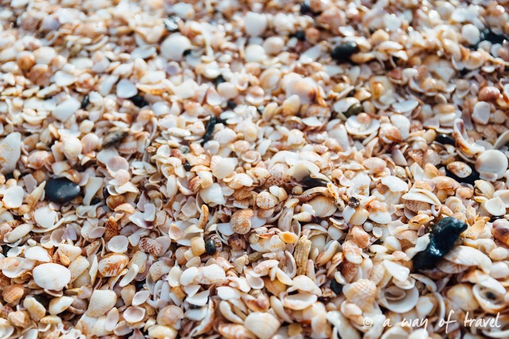 Saint Barth Barthelemy Caraibes Antilles Francaises shell beach 38