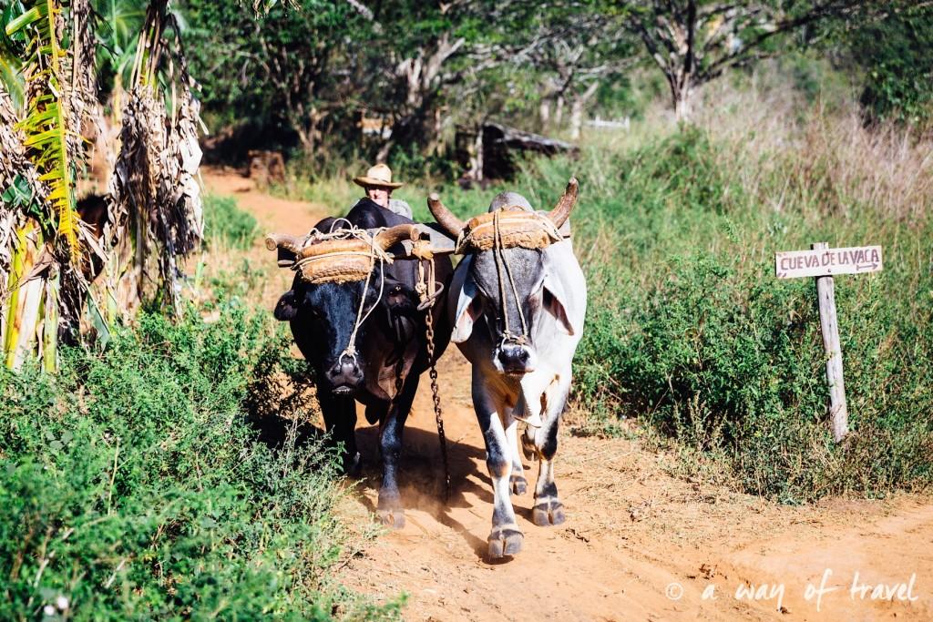 Vinales Cuba Guide Voyage 26