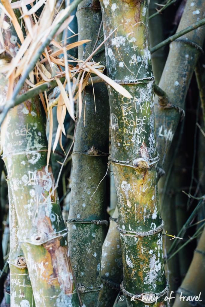 Visiter cuba guide cienfuegos jardin botanique 28