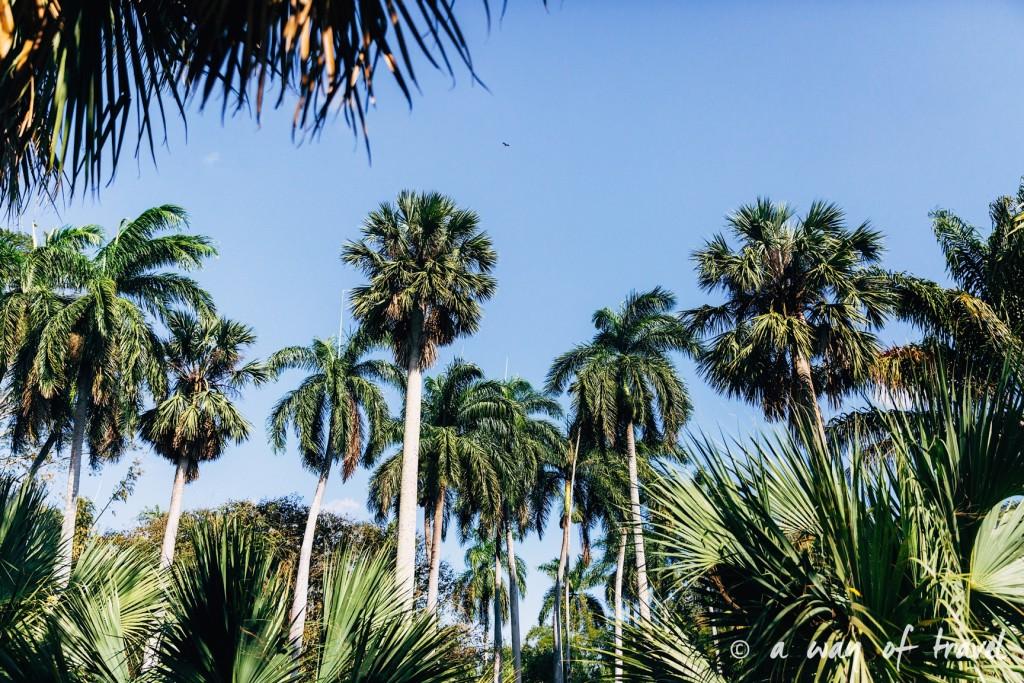 Visiter cuba guide cienfuegos jardin botanique 30