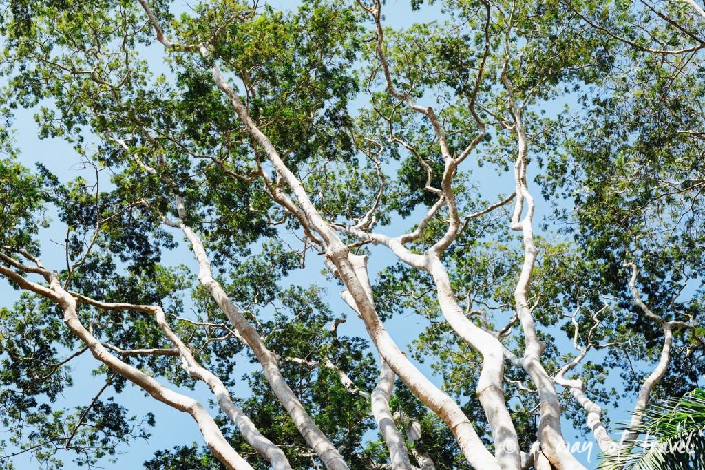 Visiter cuba guide cienfuegos jardin botanique 31