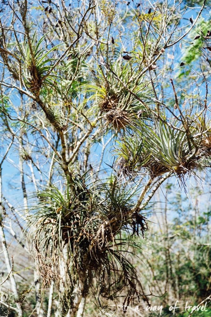 Visiter cuba guide cienfuegos jardin botanique 33