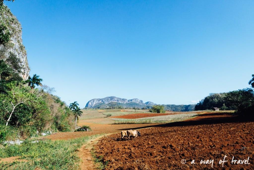plantation tabac Vinales Cuba Guide Voyage 30