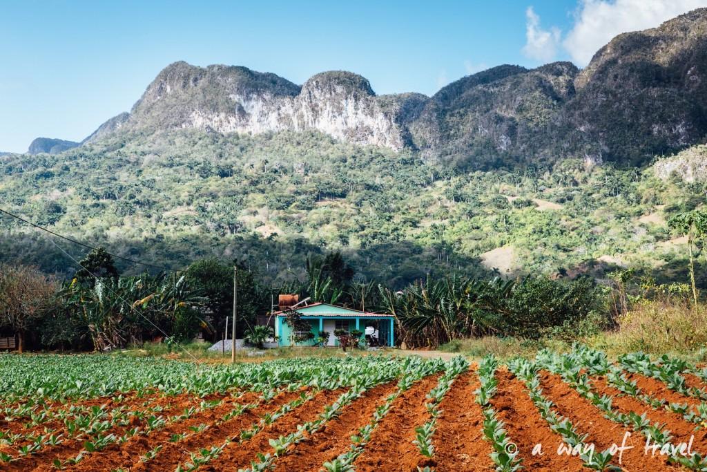 plantation tabac Vinales Cuba Guide Voyage 50